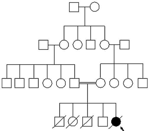 i-c10b979f4575734875afb42e28ceb885-stammbaum.jpg