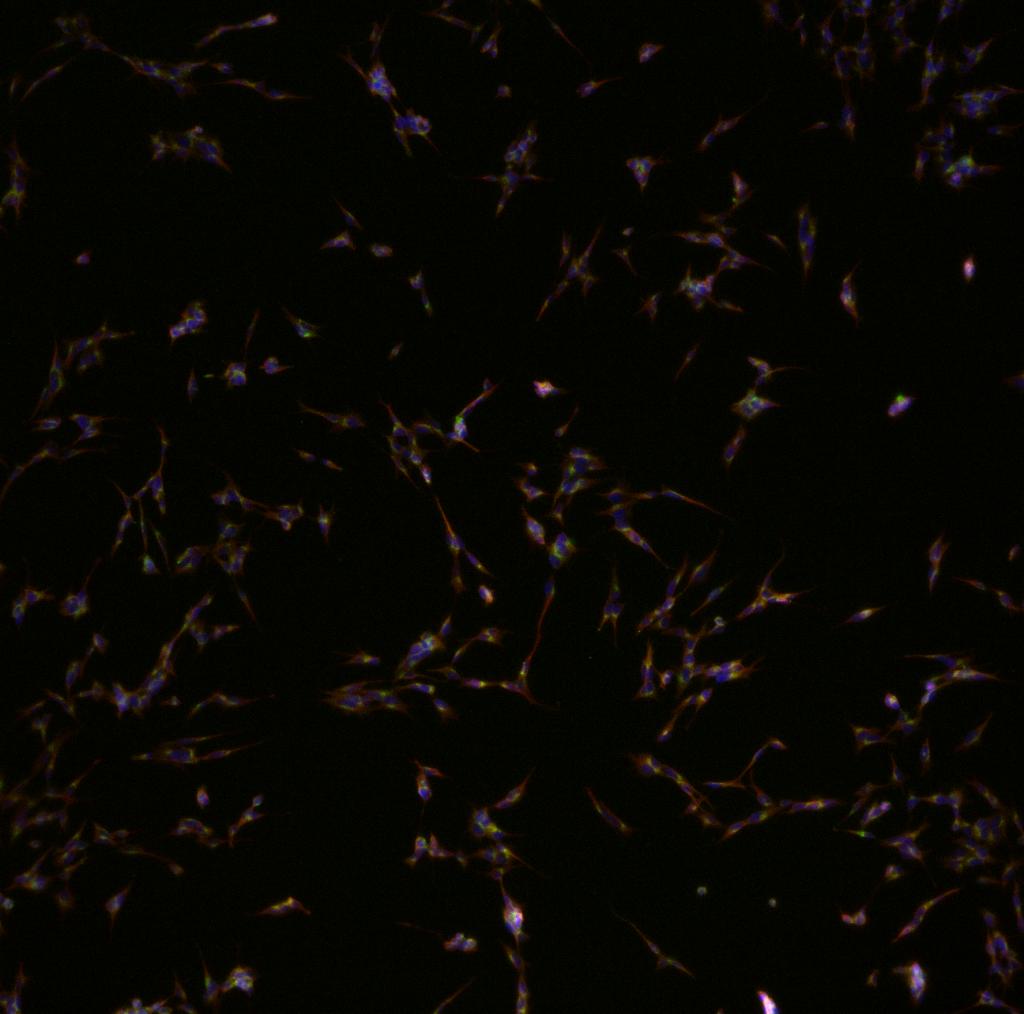 Zellen...