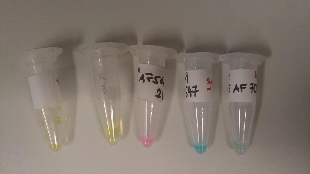 Farbstoffe, von links nach rechts: 1. Anregung nahes UV, Fluoreszenz Violett/blau, 2. Anregung blau, Fluoreszenz grün, 3. Anregung grün, Fluoreszenz orange/rot (Alexa Fluor 568), 4. Anregung rot, Fluoreszenz tiefrot/nahes Infrarot, 5. Anregung tiefrot, Fluoresznz nahes Infrarot.