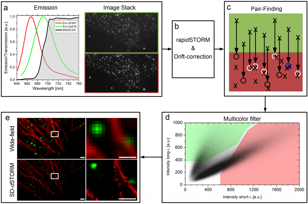 Der Workflow von SD-dSTORM. Lampe et al., Spectral demixing avoids registration errors and reduces noise in multicolor localization-based super-resolution microscopy, Methods and Applications in Fluorescence, Volume 3, Number 3, 13 August 2015 © IOP Publishing. Reproduced with permission. All rights reserved