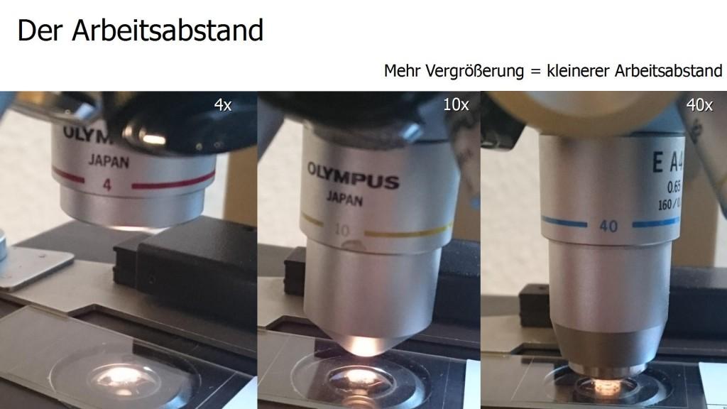 Mikroskopie wie fängt man an und mit was u die kleinen dinge