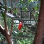 Der Blick aus dem Regenwald auf den Science-Center-Teil.