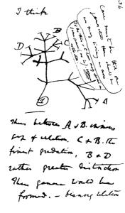 Darwins Stammbaum