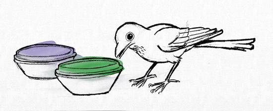 Illustration des Vogelexperimentes (© evolvimus)