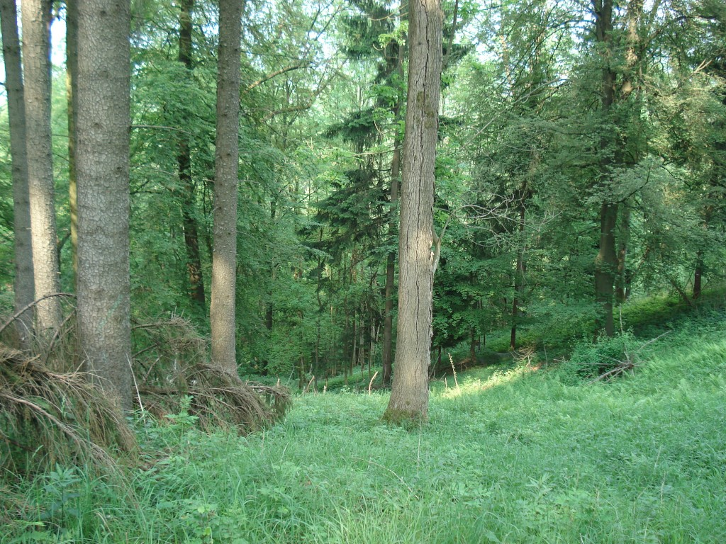 Harzhorn