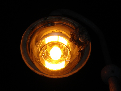 i-19701b3ecd19cffececbd4198fb11990-Insektenwaben-Nacht-thumb-512x384.jpg