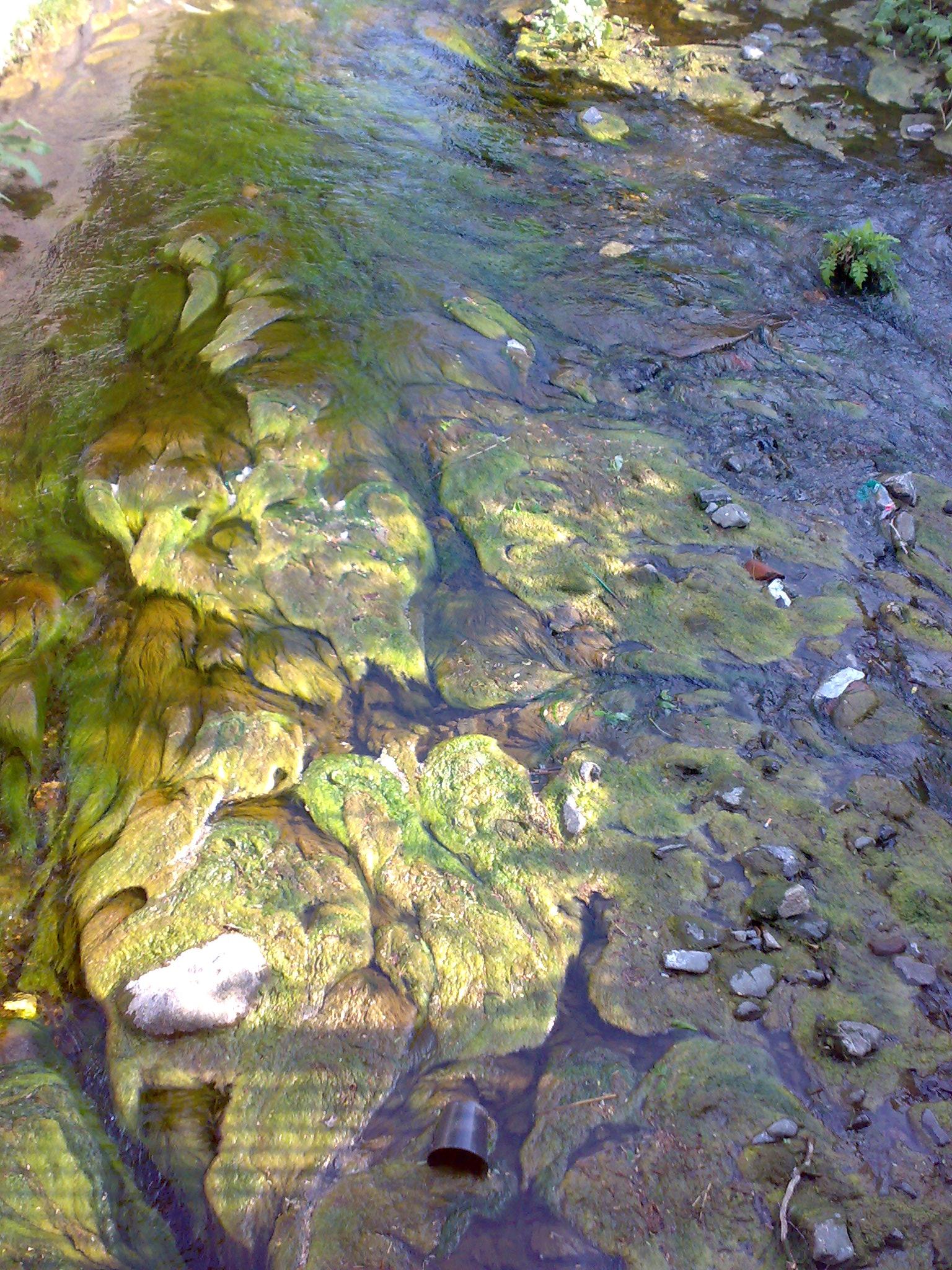 wild abfließendes wasser