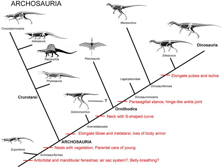 104Archosauria