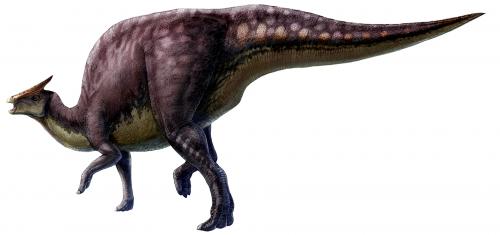 Saurolophus_scalation