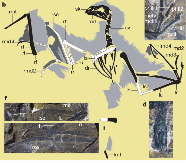 Dino-bat out of hell – Hier wohnen Drachen