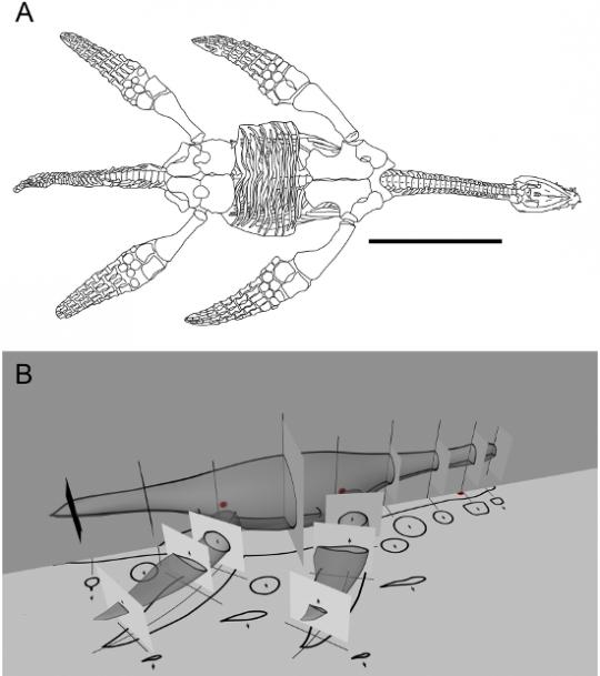 plesiosaurus2