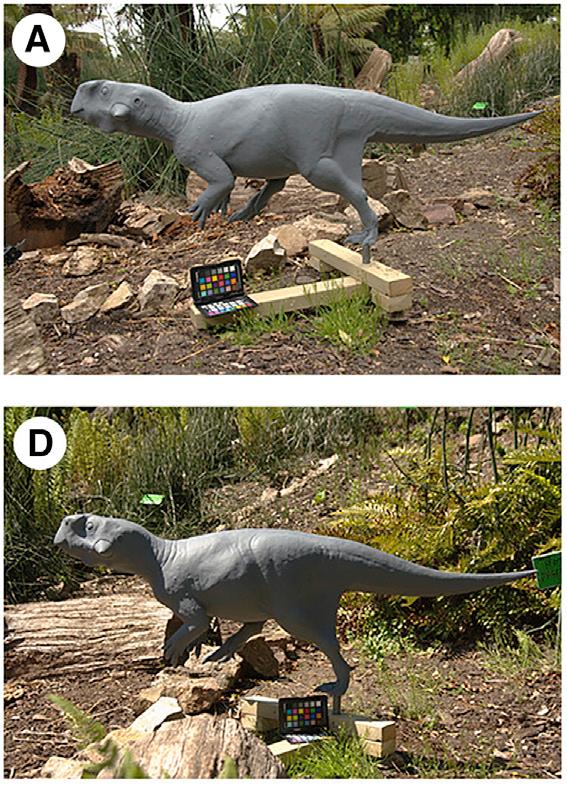 dinosaurier bilder zum ausdrucken farbig  cartoon