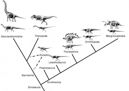 dinoclado
