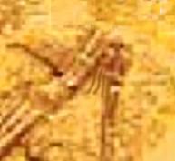 i-40aa639969755065b637eb07d2a98300-homosaurusFinger.jpg