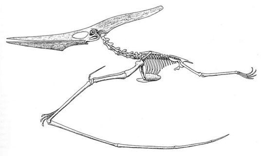 i-7baabd73986eb8e11614859e0a7970e4-Pteranodon_reconstruction_Eaton_1910-thumb-540x321.jpg