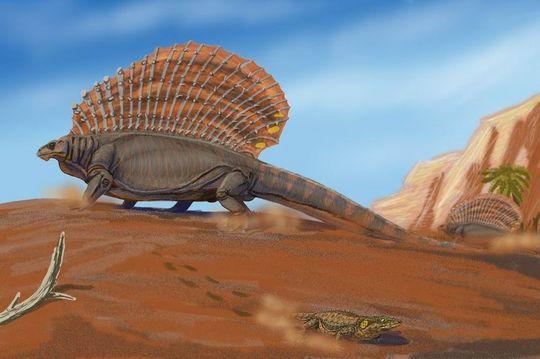 i-9d4b2336b8dc53c8ff3fc077cc7e52d1-Edaphosaurus_pogonias-thumb-540x359.jpg