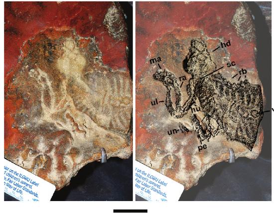 i-b359082cf206a43029c9521ad63b2adf-propanoplosaurus1-thumb-550x428.jpg