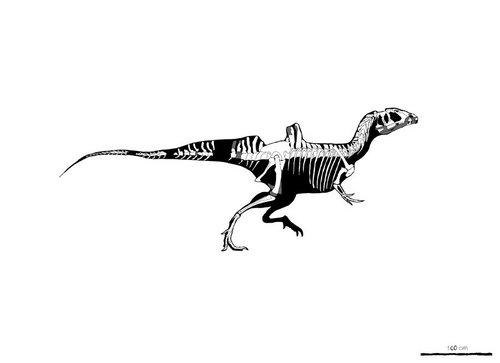 i-f5f63363f7d19c97045c4d73d48ffb83-concavenator_skeletal_by_palaeozoologist-d2zsb16-thumb-500x363.jpg
