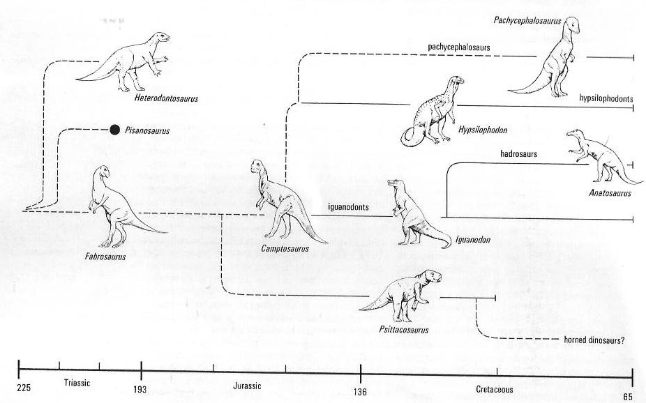 Kladistik die unbekannte wissenschaftsrevolution hier wohnen drachen i f8475893ac242423d0b64ce35f87c054 ornithopoden thumb 540x337g ccuart Choice Image