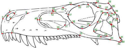 i-88ace0a15f0b48d099fec37da16c5f19-birdskullLandmarks-thumb-500x195-32201.jpg