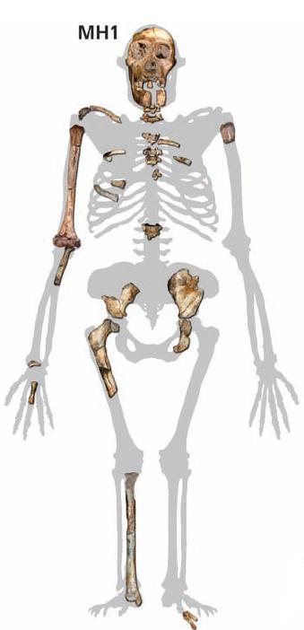 i-b34ceeffd0d70fbc7b48b495bebf4c80-MH1_skeleton_Australopithecus_sediba.jpg
