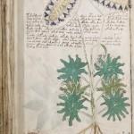 00001-Voynich-Manuscript