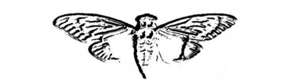 Cicada-3301-bar