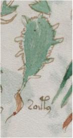 Voynich-Cactus