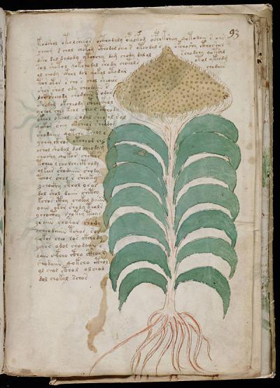 Voynich-93