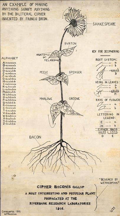 Friedman-Bacon-Sunflower-1