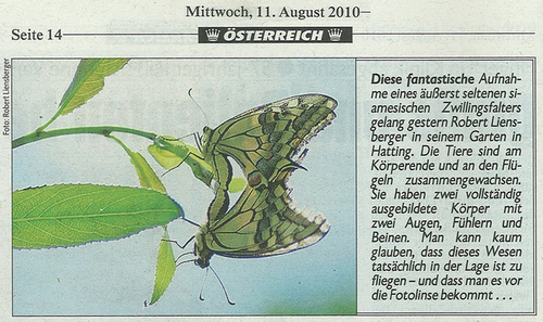 i-d0738cd0d26d025d69baa164a6e8094e-kronenzeitung-2010-08-11-siamesischer-zwillingsfalter-thumb-500x297.jpg