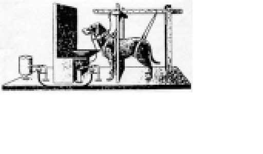 grenzhund