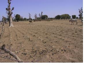 i-0a90b8663cddc8e02f44ed3f38f59c65-farm_dust.jpg