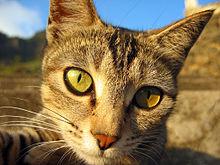 i-b0a4a4876d2296b22f0b01a44bb42c1e-220px-Hauskatze_in_Abendsonne.jpg