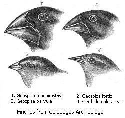 i-7621c492916519a96e4027e46820c154-Darwin's_finches.jpeg