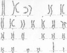 i-95d578f6db6dce2f0ee33b811cc11429-220px-Genom_bsteinmann.jpg