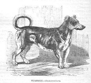 300px-Turnspitdog-1862