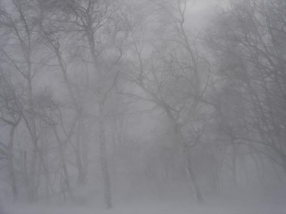 Bäume im Schneesturm bei schlechter Sicht