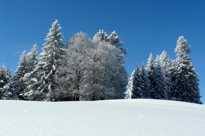 i-b6fc4eaa86c80bd1be12dbea3d5a83ed-winter.jpg