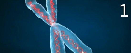 i-0889b5d6f40cf07eae7d3cdd826c72fc-chromosome1-thumb-550x224.jpg