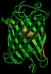 i-1b3b7d7ae94666f7330eacd485a1450a-GFP-thumb-200x288.jpg