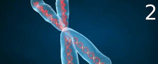 i-2b97511f06e3eafb53623ae42411e4e2-chromosome2-thumb-550x224.jpg