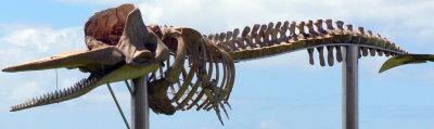 i-550c7c27e96255037b5bdadf22f14a17-whale-skeleton-small.jpg