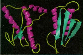 i-5cea283d7c2950e8b0cab3c0bf6d0f29-Prion-Protein.jpg