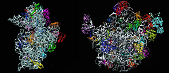 i-c05687d01b718f9d0b9e073bfb517075-ribosome-thumb-550x238.jpg