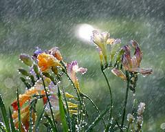 i-d249f3f78838d2e59a9380f626333387-rain.jpg